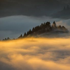 Mist in Pieniny van Wojciech Kruczynski