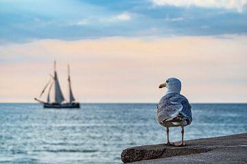 Segelschiff und Möwe auf der Hanse Sail in Rostock von Rico Ködder