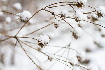sneeuwbloemen von Marieke de Boer