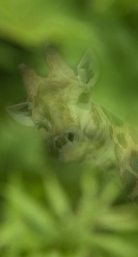 Giraffe dubbelbeeld