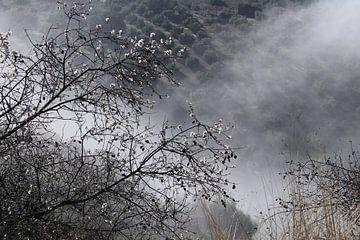 Mist in de vallei. van Jan Katuin