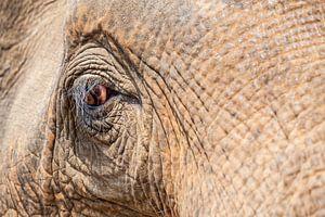 eine Nahaufnahme eines alten Elefantenauges.