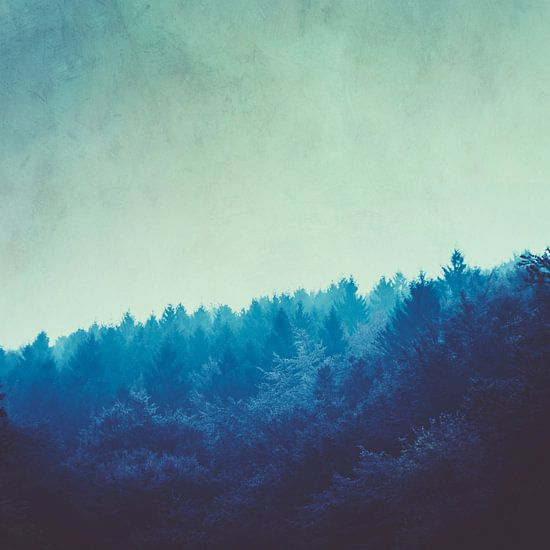 Blauw bos in ochtendmist