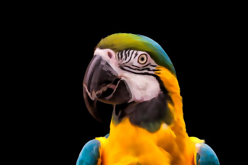 Portret van een papegaai  van Tim Abeln