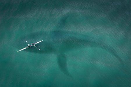 Kano boven Walvis in de zee von Sarah Richter