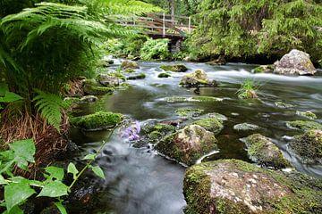 Swedish stream van Patrick vdf. van der Heijden