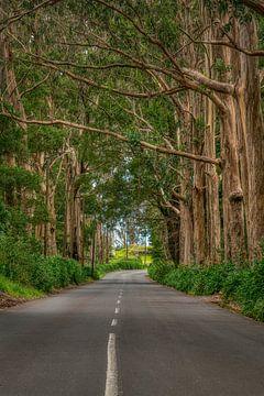 De weg naar Porto Moniz... sur Peter Korevaar