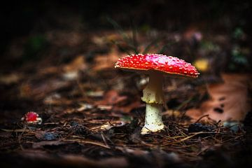 Herbst von Eus Driessen