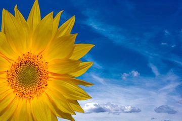 Concept Sunflower van