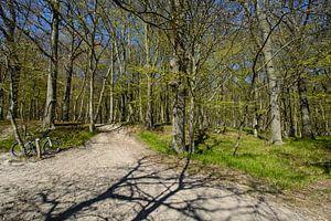 ad- Wanderweg  entlang am Naturstrand in der Goor