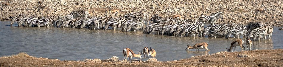 Zebra Crossing van BL Photography