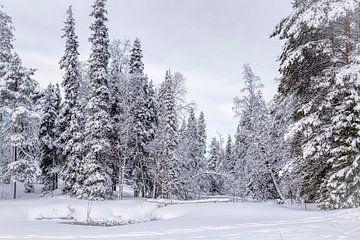 Panorama-Winterlandschaft, Finnland von Rietje Bulthuis