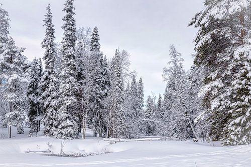 Panoramisch winterlandschap, Finland