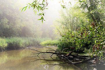Misty morning in nature van Elizabeth Babtist