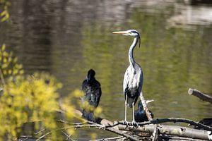 Bird vogel van