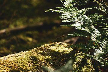 Magisch mos in het bos van Elise van der Bruggen