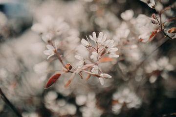 Blühen mit Details von Sanne van Pinxten