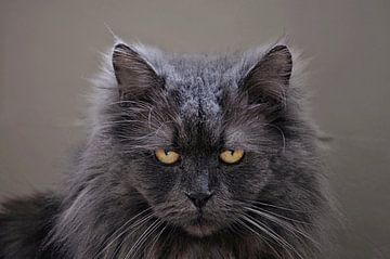 Katze von Leo Huijzer