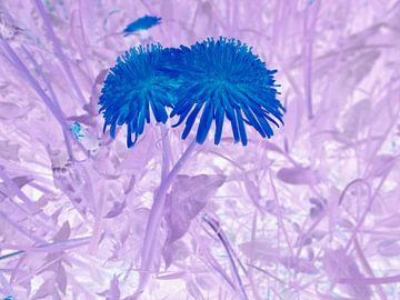 Blaue blume van Jenny Heß