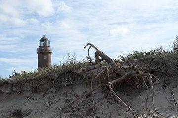 Baumwurzel im Vordergrund: Der Leuchtturm auf dem Darss von Anja Bagunk