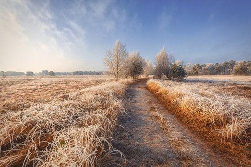 Een winterochtend in de natuur van