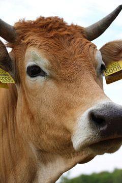 Koe van Marieke van Milligen
