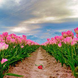 Tulips Flevoland, The Netherlands van Han Kedde