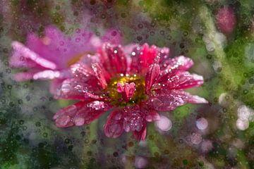 Een bloem, de margriet van Carla van Zomeren