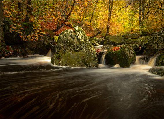 Automne à la rivière La Hoegne dans les Hautes Fagnes dans les Ardennes.