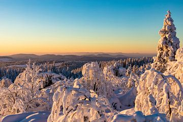 Winter in het Nationaal Park Zwarte Woud van Werner Dieterich
