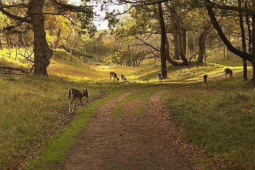 Damherten in de herfst von Nella van Zalk