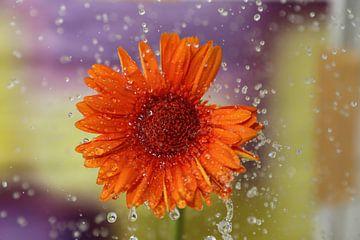 Blume im Regen von Martin Bäumler