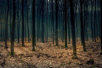 Geisterbäume von Hilda van den Burgt