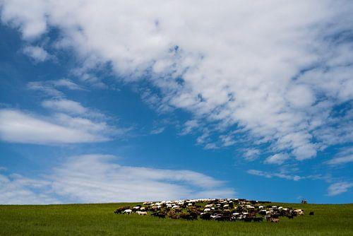 Mongolian herd von