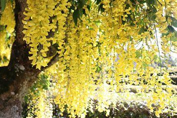 Gelber Regen von Kimberley Fennema