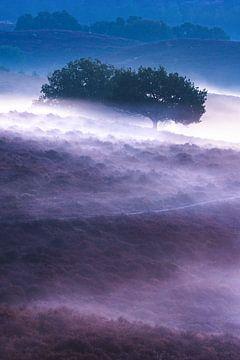 Bäume im Nebel von Sander Grefte