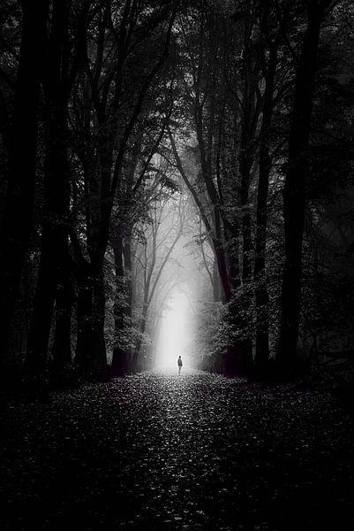 Into the light van Martijn Kort