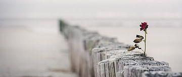 Roos in de wind von Gerrit Anema