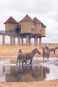 Zebra's in waterpoel van