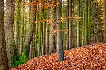 Gemengd Herfstbos met een Beukenboom van Katho Menden