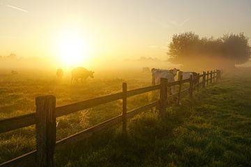 Koeien in het weiland van Dirk van Egmond