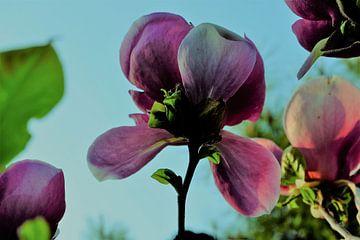 Bloem aan de Tulpenboom 2.3 van Marian Klerx