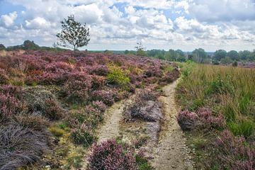 Heidelandschap op de Sallandse Heuvelrug van Ron Poot