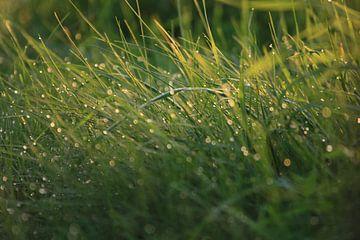 Gras van Monique Struijs
