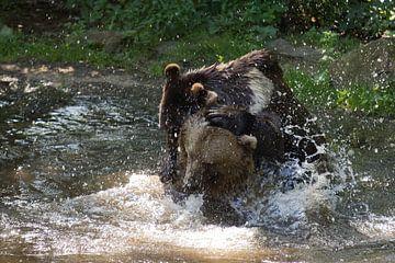 Brown bears von Judith van der Graaf
