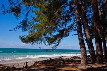Kiefern vor dem Meer, Kiefernzweige über dem Strand, die legendären Kolchis aus den griechischen Myt von Michael Semenov