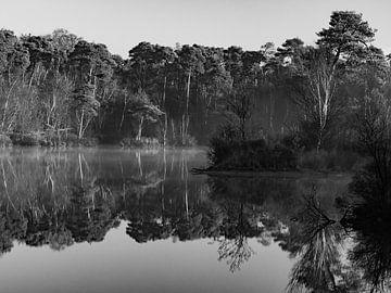 L'automne à Oisterwijk en noir et blanc sur Ronne Vinkx