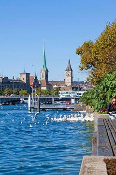 Zürich - Zwanen op het meer van Zürich van t.ART