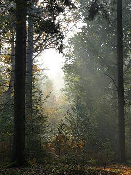 Herbstlicher Wald von Odette Kleeblatt