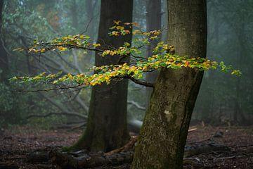 Autumn.... van Peter Korevaar
